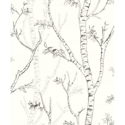 Tapeta NG3210 biało czarne drzewa brzozy